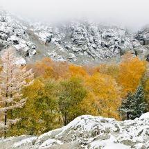 nuno-reis-outono-ou-inverno