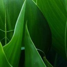 setembro-vida-em-verde